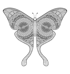 black butterfly vector image