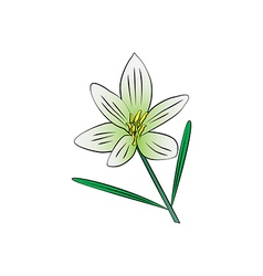 Cosmos flower vector
