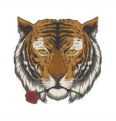 tiger biting rose vector image