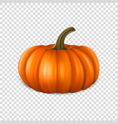 Realistic pumpkin closeup isolated on transparency vector