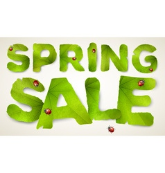 Spring Sale words made from green leaves vector image