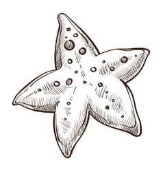 underwater animal starfish isolated sketch vector image