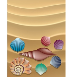 shells on the sand vector image