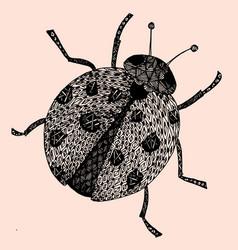 ladybird on white background vector image