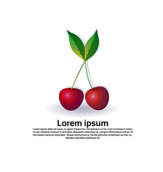 cherry fruit on white background healthy vector image
