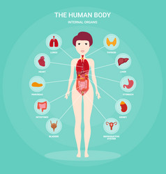Human anatomy infographic elements with set of vector