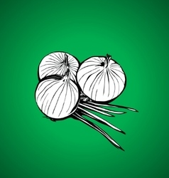 Onions vector