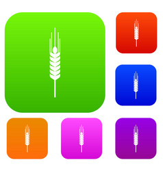 Stalk of ripe barley set collection vector