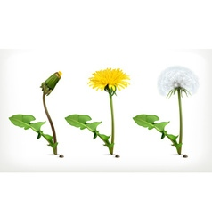 Dandelion flowers icon set vector image