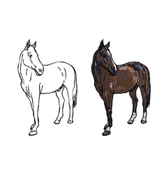 Elegance horse on white background vector image