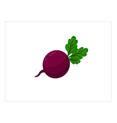 fresh beet with leaf vector image