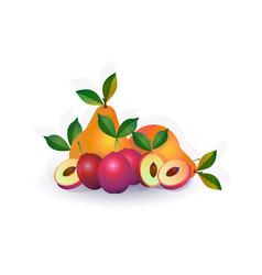 pear plum fruit on white background healthy vector image