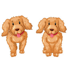 Two puppies with brown fur vector