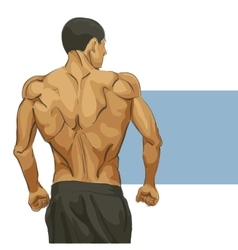 Muscular man body vector image