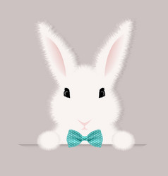 white rabbit vector image vector image