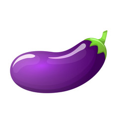 eggplant isolated vector image