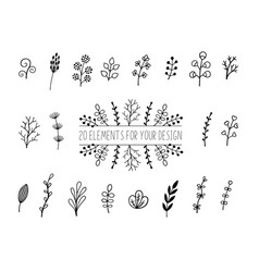 floral and herbal set botanical elements vector image