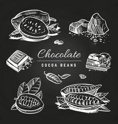 hand drawing chocolate and cocoa beans on vector image