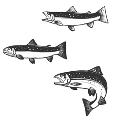 Set of trout silhouettes vector