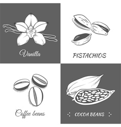 Set with vanilla pistachios cocoa and coffee beans vector
