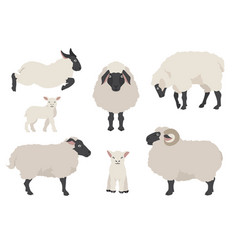 Sheep poses collection farm animals set flat vector