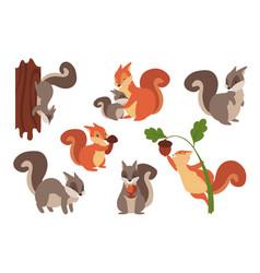 Squirrel cartoon wild furry animals playing vector
