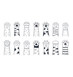 cute cat paws doodle kitten and puppy limbs wild vector image