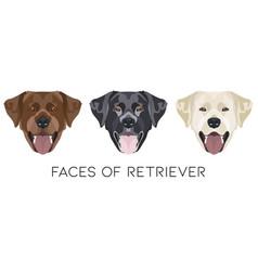 faces labrador retriever vector image