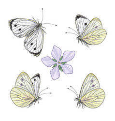 Hand drawn flying and sitting cabbage butterflies vector