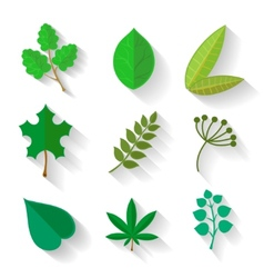 Set leaves various trees isolated green leave vector