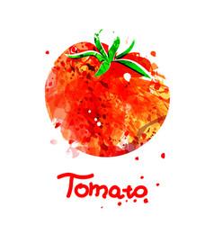 Watercolor of tomato vector