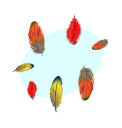 hand drawn set of various colorful bird feathers vector image vector image