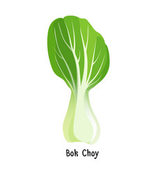Bok choy or pak choi type of chinese cabbage vector