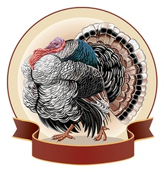 graphical turkey-cock vector image