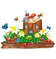 Scene with ants and butterflies in garden vector