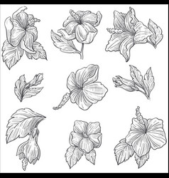 Wild flower or hibiscus plant blossom isolated vector