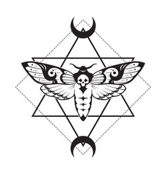 Deaths head hawk moth and sacred geometry vector