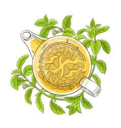 stevia tea in teapot vector image