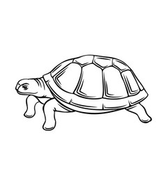 Turtle outline icon vector