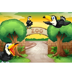 Zoo and birds vector