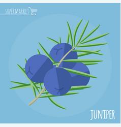 juniper flat design icon vector image vector image