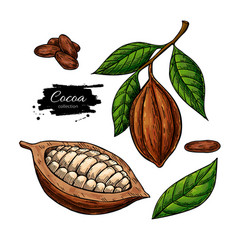 cocoa superfood drawing set organic vector image