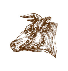 cow head profile sketch vector image