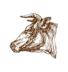 cow head profile sketch vector image