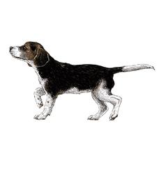 Dog 01 vector