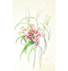 watercolor lily vector image vector image