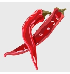 Two realistic red Chile peppers food icon vector image