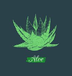 Aloe isolated hand drawn vector