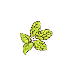 Cartoon green beer hop cones with leaves vector