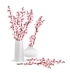Cherry blossom branches in vase vector